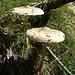 enormi mazze di tamburo lungo il sentiero