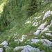 unten quert der Steig dann rechst raus, durch steiles Wiesengelände