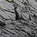 Ein Murmeltier in der Felswüste.