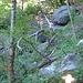 Geknickte Bäume, beschädigte Baumstämme und herumliegende Brocken zeugen von Steinschlag und kleineren Felsstürzen.