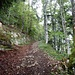 auf alter Strasse im Wald hinunter zu P. 885 und P. 845