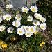 ... an schönem Blumenpolster vorbei ...