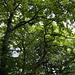 Schönheiten des Waldes