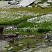 Auf dem Weg treffen wir auf wunderschöne Ecken, die wir so am Gotthardpass nicht erwartet hätten :-)