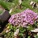 eines der beliebten Blumen-Polster
