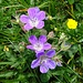 Blumenpracht auf dem Biet 4