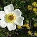 ... an weiteren Blumen ...