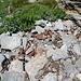 einige derartige unschöne Deponien finden wir unterhalb der Weissmieshütten