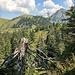 Giblenkopf: Blick zum Diedamskopf
