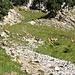 Einige Gämsen wurden von uns überrascht beim Rocher du Midi