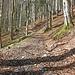 Durch Wald geht es steil nach oben,...