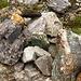 Hier hat mir jemand die Mühe erspart, Steine zu sammeln
