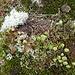 Wieviele Pflanzenarten wachsen wohl auf diesem Quadratmeter?