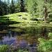 Verwunschener Waldtümpel oberhalb des Restaurant Alpenrose