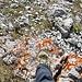 Da stehe ich auf dem Gipfel. Keine Markierungen, nix. Aber ich war drauf - eine Hikr-Erstbesteigung! :-)
