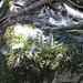 Anche se il bosco sembra silenzioso e deserto, se si è attenti si notano spesso tracce o segni della presenza di animali (moltissimi quelli lasciati dai cinghiali). In questo caso si può notare quello che resta di una ghiandaia (inconfondibili le sue piume alari) predata da uno dei tanti rapaci (molto probabilmente uno sparviere) presenti in gran numero nei cieli di Sardegna.