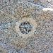 Steinkreiszeichen