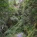 typischer Wegabschnitt im Abstieg nach Stechelberg