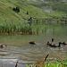 Der Seefeldsee mit einer Stockenten Familie.