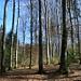 sehenswerte Waldstimmung nahe Gänterli