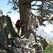 """Uno dei tanti spettacolari grandi pini secolari dell'isola. Uno dei tanti """"grandi nonni"""" (!)..... E il loro profumo di resina è intensissimo quando ci passi vicino....."""