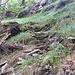 Treppen zwischen Chint und Cranzünell