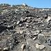 Oggi passiamo nei pressi dei luoghi bruciati a causa di un incendio qualche settimana fà, presso Colle del Verde..... Ci avevano informati in merito al fuoco...... E qui: che tristezza e desolazione..... :-( :-( :-(