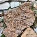 Tufstein, wenn ich das richtig klassifiziere. Nach dem Gestein ist angeblich der Piz Tuf benannt, und tatsächlich dominiert das Zeug dort. Auffälliger und ungewöhnlicher finde ich persönlich aber das violette und das grüne Schiefergestein.