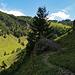 Rückblick auf den Wanderweg und bis zur Alpchäserei Kleinbetten und dem Nusshaldensattel.