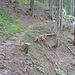 Abstieg durch den Dürrenwald