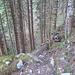 Interessanter Weg durch den Dürrenwald