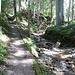 Aufstieg dem Saaligrabe entlang zur Chrine