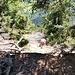 Ausstieg 23. SL hin zur Schlinge an einem Baum.
