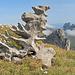 eine Skulptur von der Natur geformt, echt schön!.