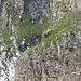 Gemsen am Klettern, kurz vor der Wagenlücke.