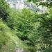 schöner Waldsteig