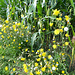 Nette Blumen an Mais