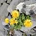 aufgelockert mit kräftig leuchtenden Blumen