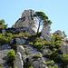 lustige Kombination, der Baum zwischen den Felsen