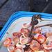 die armen Seepferdchen, sie sind nicht für den Verzehr geeignet. Warum gibt man sie nicht zurück ins Wasser, wo sie doch so selten geworden sind?