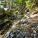 Im schönen Bergwald nach dem ersten sehr steilen Stück