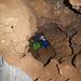Kaminkletterei - gut zu erkennen sind die marmorierten Griffe und die durchgehend rote Markierung des Hauptweges durch die Höhle.