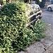 """Il SUV """"ecologico"""" di Bregazzana resiste."""