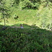 alle pendici del montorfano in mezzo ai rododendri