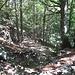 Dopo aver percorso il primo tratto allo scoperto, si entra finalmente nel bosco che ci accompagnerà fino ai Piani d'Erna.
