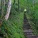 Eine lange Treppe, die einem wieder ans Seeufer hinunter führt.