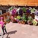 viele Blumen bei der Bergstation