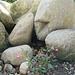 und schöne Steine