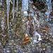 Labyrinth Natur