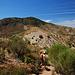 Den nächsten Hügel umgehen wir südseitig, der ist allerdings sehr stark bewachsen. Am besten folgt man Tierspuren.